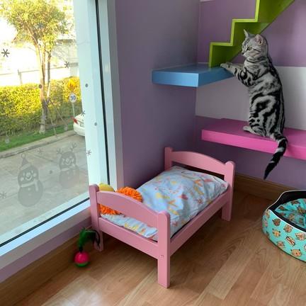 ขอขอบคุณรูปภาพจาก FB Cat A Rest - โรงแรมแมว แคทอะเรสต์