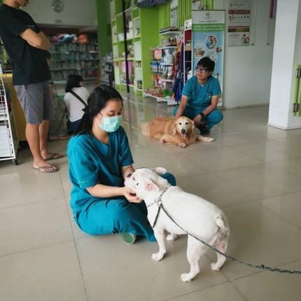 ขอขอบคุณรูปภาพจาก FB โรงพยาบาลสัตว์ไอเว็ท - iVET hospital