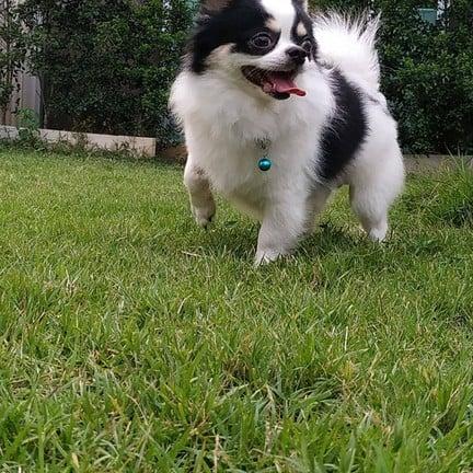 ขอขอบคุณรูปภาพจาก FB รับฝากเลี้ยงสุนัข Puppy Land Resort