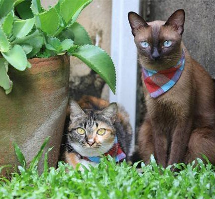 ขอขอบคุณรูปภาพจากเว็บไซต์ http://catdominium.com