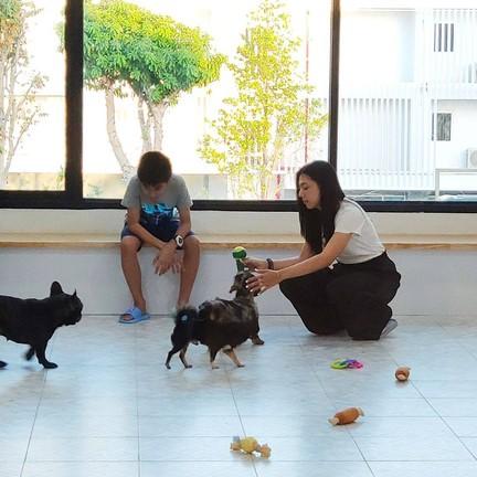 Love Dog Cafe & Studio