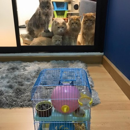 Casa De Cat Pet Hotel