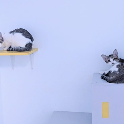 Catbackpacker โรงแรมแมวดอนเมือง
