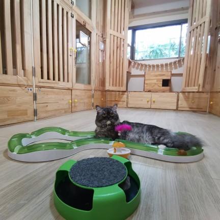 Gatto cat hotel กัตโต้ โรงแรมแมว รับฝากแมว