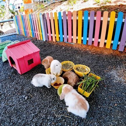 มาให้อาหารบ้านกระต่ายหูตก