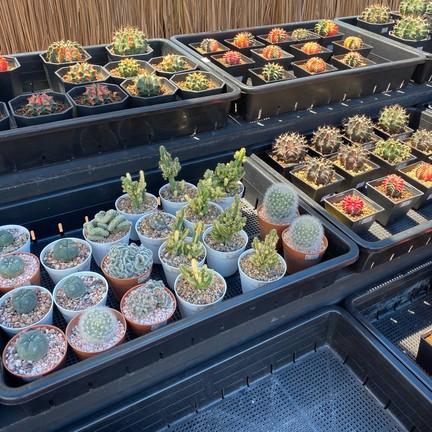 สวนสัปปายะ Cactus Farm