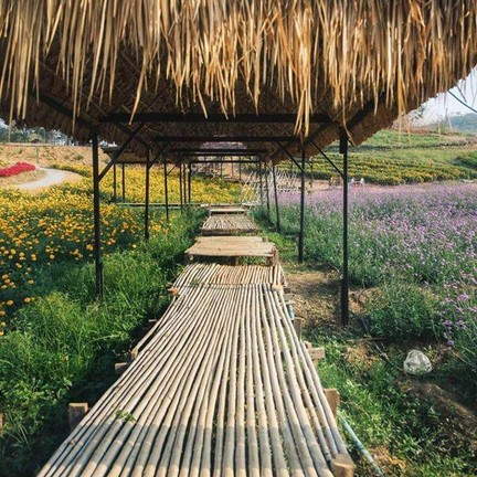 Flowermountain Khaoyai