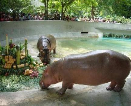 สวนสัตว์ลพบุรี