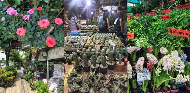 12 ตลาดต้นไม้ในกรุงเทพฯ เดินเพลินชอปสบายได้ต้นไม้ดอกไม้สวย ๆ