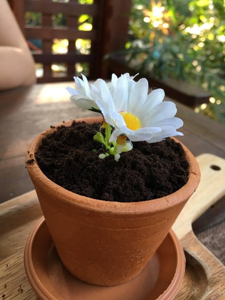 Daisy pot##1