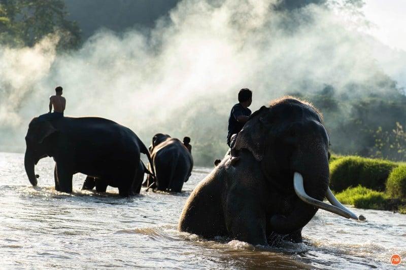 ปางช้างแม่แตง แม่แตง เชียงใหม่ ที่เที่ยวเชียงใหม่