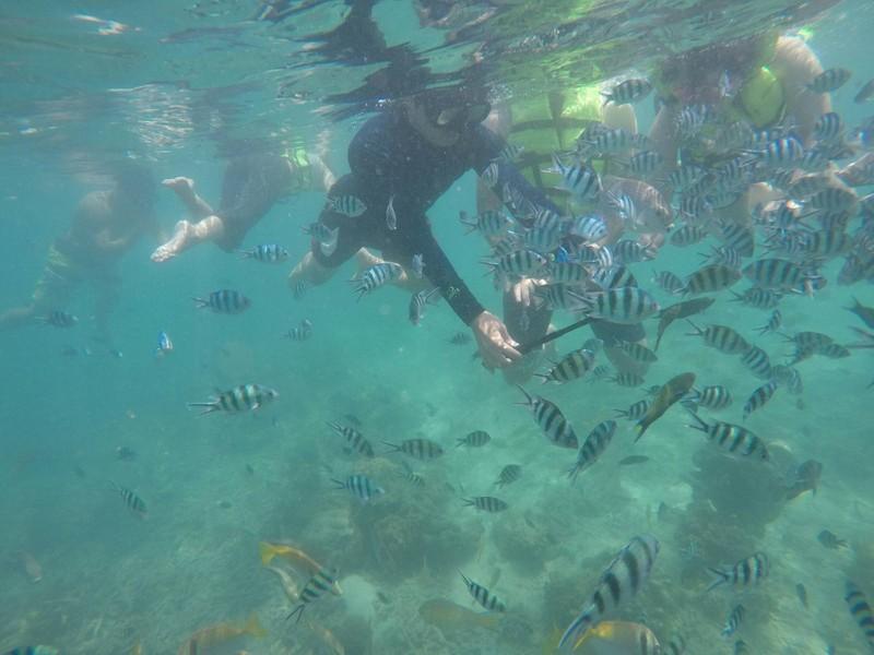 ปะการังเยอะ สัตว์น้ำก็เยอะค่ะ