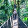 Doi Tung Tree Top Walk