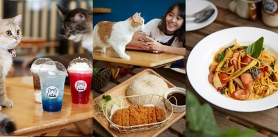 สวรรค์ของทาสแมว! คาเฟ่แมวสำหรับมนุษย์ผู้รักเจ้าขนปุยที่ Cat Human Cafe