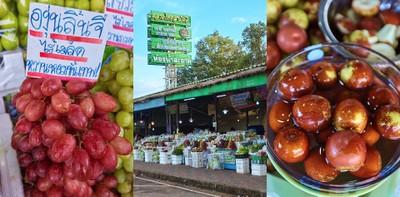 ตลาดไทยสามัคคี วังน้ำเขียว ช็อปของดีราคาถูก จากมือเกษตรกร