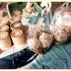 ด้วง อาหารไทย