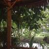Thong-U-Rai